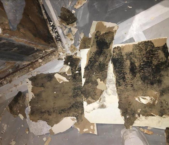 mold finding on wall due to water leak